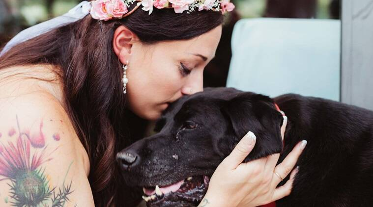 dogs, dog stories, dog dying of brain tumor attends wedding, dog affected by brain tumor attends owner wedding, emotional dog stories, touching do stories, dogs of facebook, dogs of instagram, indian express, indian express news
