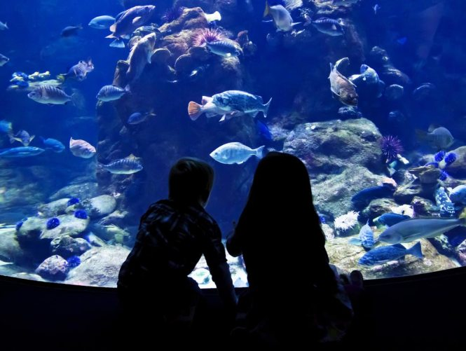 About Sao Paulo Aquarium (Aquario de Sao Paulo) in Brazil - Map ...