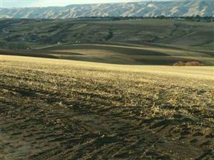 Photo of Lot 4 West Side Acres, Lewiston, ID 83501 (MLS # 114616)