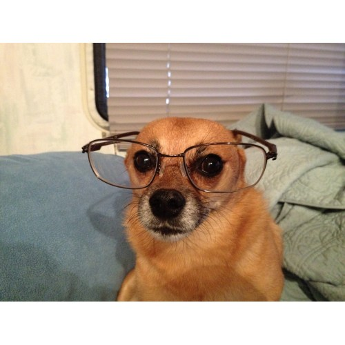 Medium Crop Of Dogs With Glasses