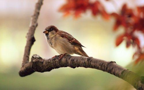 Medium Of Birds On A Branch