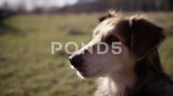 Special Close Portrait Dog Licking Lips Footage 082733363 Prevstill Dog Licking Lips After Vomiting Dog Licking Lips Seizure