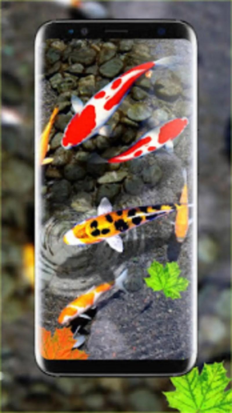 Large Of Koi Fish Wallpaper