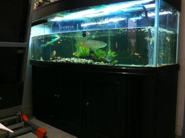 111 kb jpeg 5ft fish tank for sale fish tank jpg http www