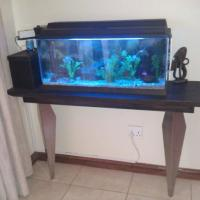 fish tanks for sale durban - Juwel Fish Tank  cabinet For Sale (urgent Sale) | Durban | Fish and