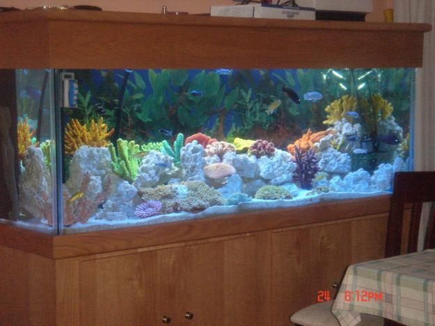 200 Gallon Aquarium For Sale Custom 200 Gallon Reef