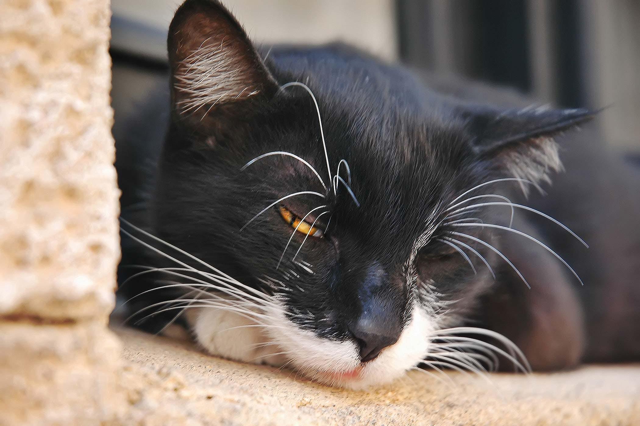 Sleek Cats Diagnosis Cat Throwing Up Clear Liquid Sneezing Cat Throwing Up Clear Liquid After Drinking Water Cats Fluid Abdomen Fluid Abdomen houzz 01 Cat Throwing Up Clear Liquid