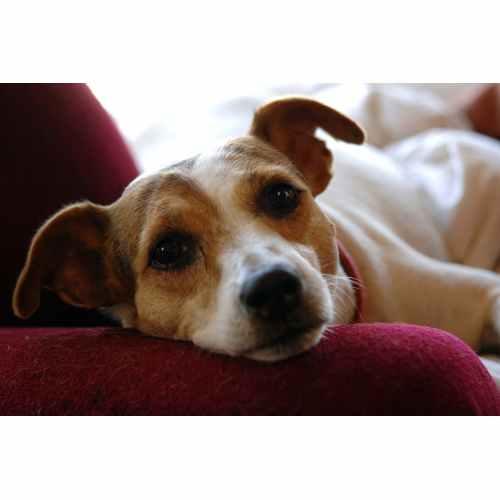 Medium Crop Of Best Dogs For Allergies