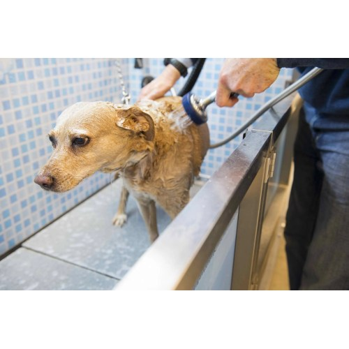 Medium Crop Of How Often Should You Wash Your Dog