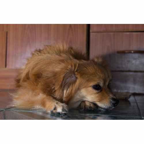 Medium Crop Of Low Energy Dog Breeds