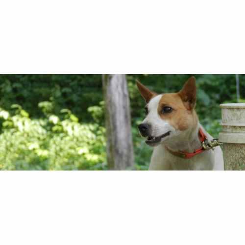 Medium Crop Of Low Maintenance Dogs