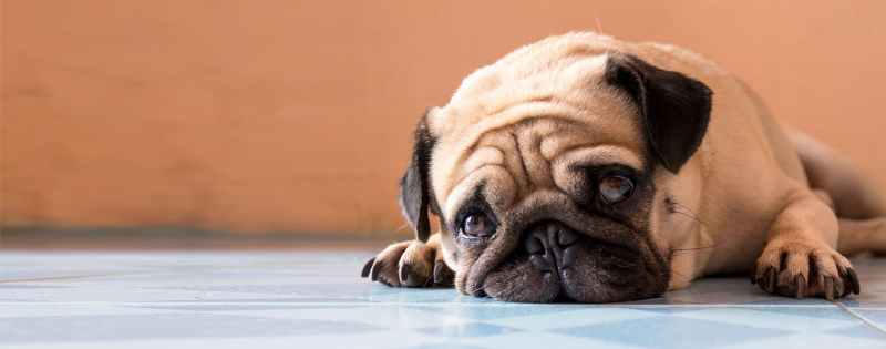 Large Of Do Dogs Cry
