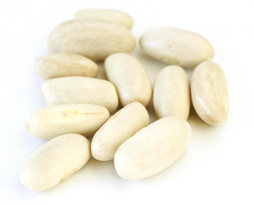 Fullsize Of What Are White Beans