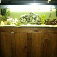 100 gallon fish tank - Fish Aquariums for Sale