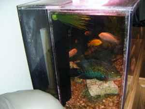gallon Acrylic Fish Tank   (rocky mount) for Sale in Roanoke, Virginia
