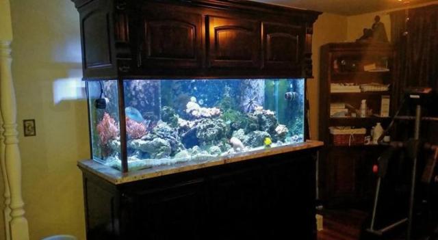 200 gallon aquarium for sale custom 200 gallon reef for Custom fish tanks for sale