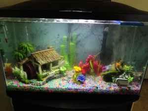 Fish Tank Set Up   (Orange Park) for Sale in Jacksonville, Florida