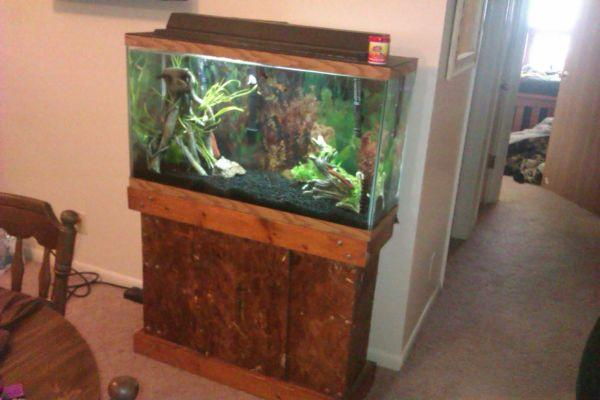 40 gallon aquarium for sale 40 gallon fish tank for sale for Tall fish tanks for sale