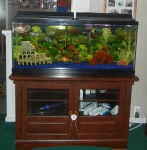 55 Gallon Fish Tank   (Le Roy) for Sale in Rochester, New York