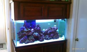 90 gallon Saltwater aquarium and cabinet   $1400