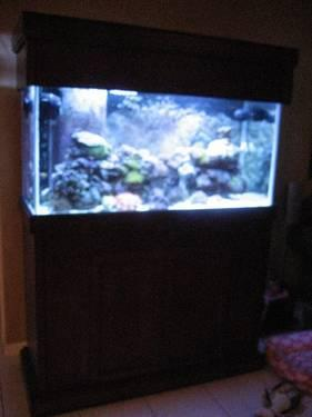 90 gallon fish tank with corals and fish cherry stand supplies
