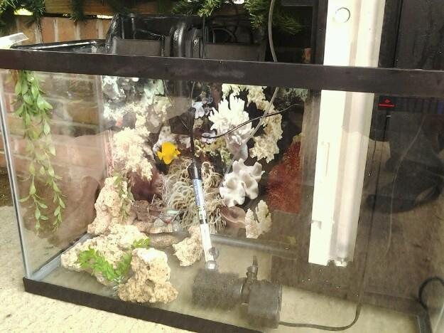 Aquarium 30 gal for Sale in Knoxville, Tennessee Classified