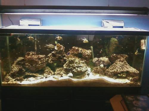 Used 20 Gallon Complet Set Up Fish Tank for sale in Richmond, Virginia