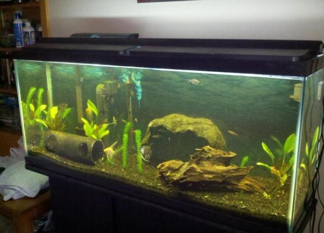 Fish Tank 55 Gallon Aquarium Fish & Everything You Need   (Mankato