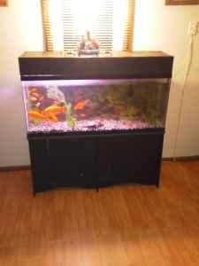 large 100 gallon fish tank   (walnut grove) for Sale in Springfield