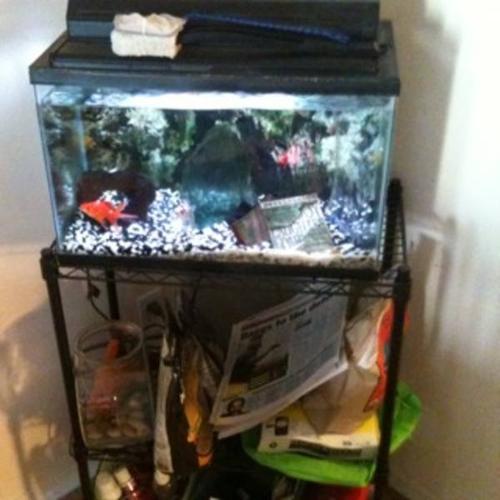 aquarium for sale hamilton 44 gallon CORNER aquarium for