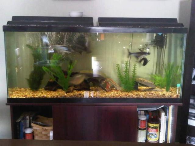 Aquarium for sale hamilton 44 gallon corner aquarium for for 55 gallon fish tank for sale