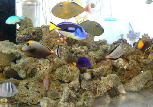 Most Beautiful Saltwater Fish Tanks ( All Time )   Page 17