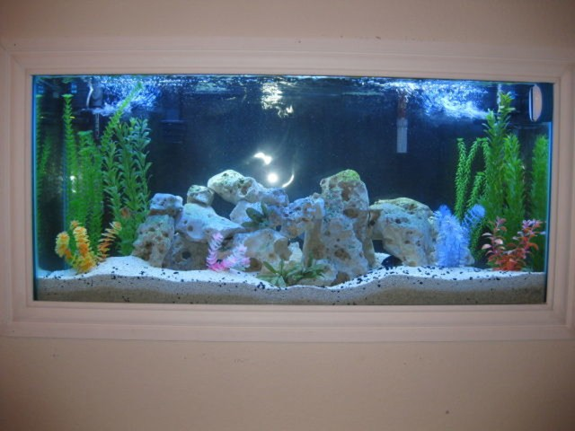 Freshwater fish tank maintenance 60 gallon 2017 fish for 55 gallon fish tank setup
