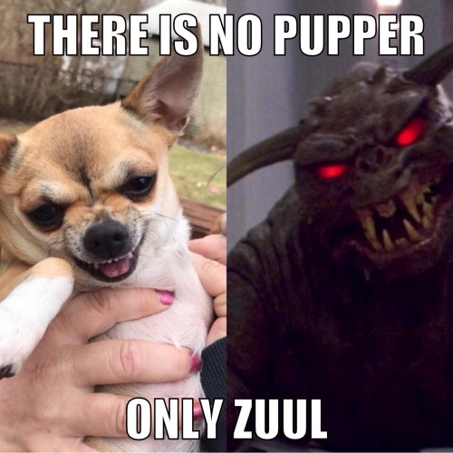 Absorbing Year S This Is A Ghostbusters Joke Meme By Joke Dog Meme Generator Bad Joke Dog Meme Generator For Year S This Is A Ghostbusters Joke Meme By