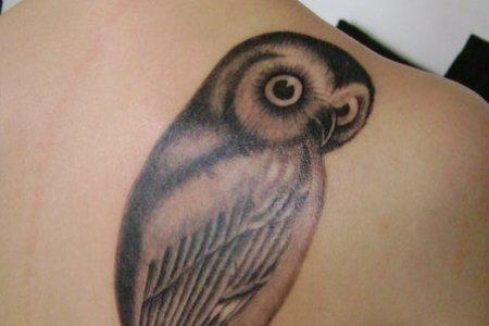 owl tattoo owls 24207218 453 592