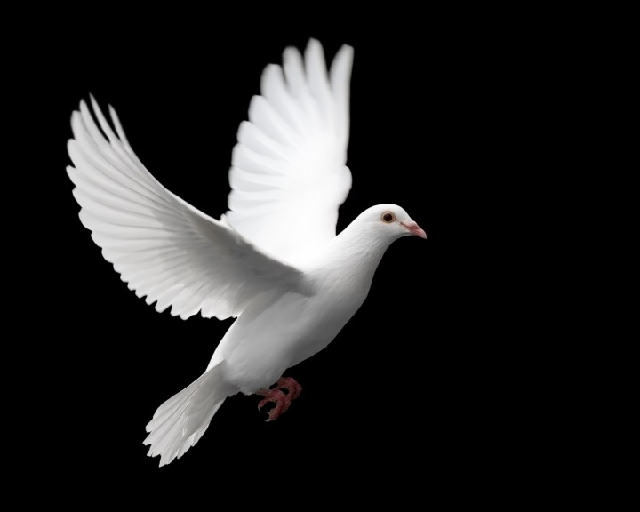 White Dove.7 Happy New Year Love Quotes I Love You Quotes 2014