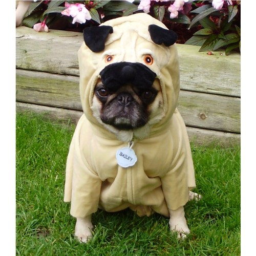 Medium Crop Of Pug In Costume