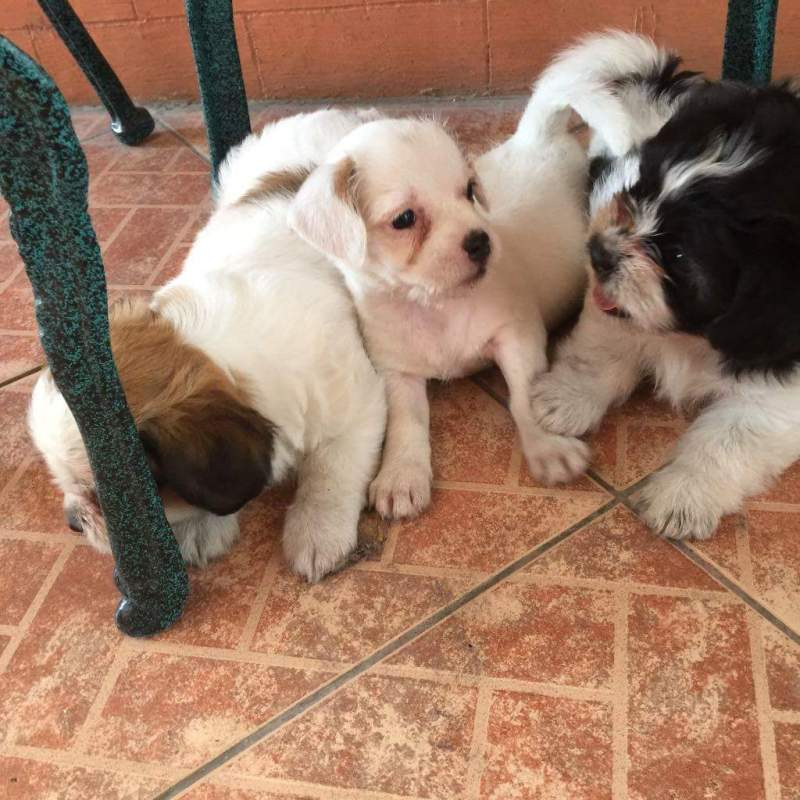 Large Of Cute Little Puppies