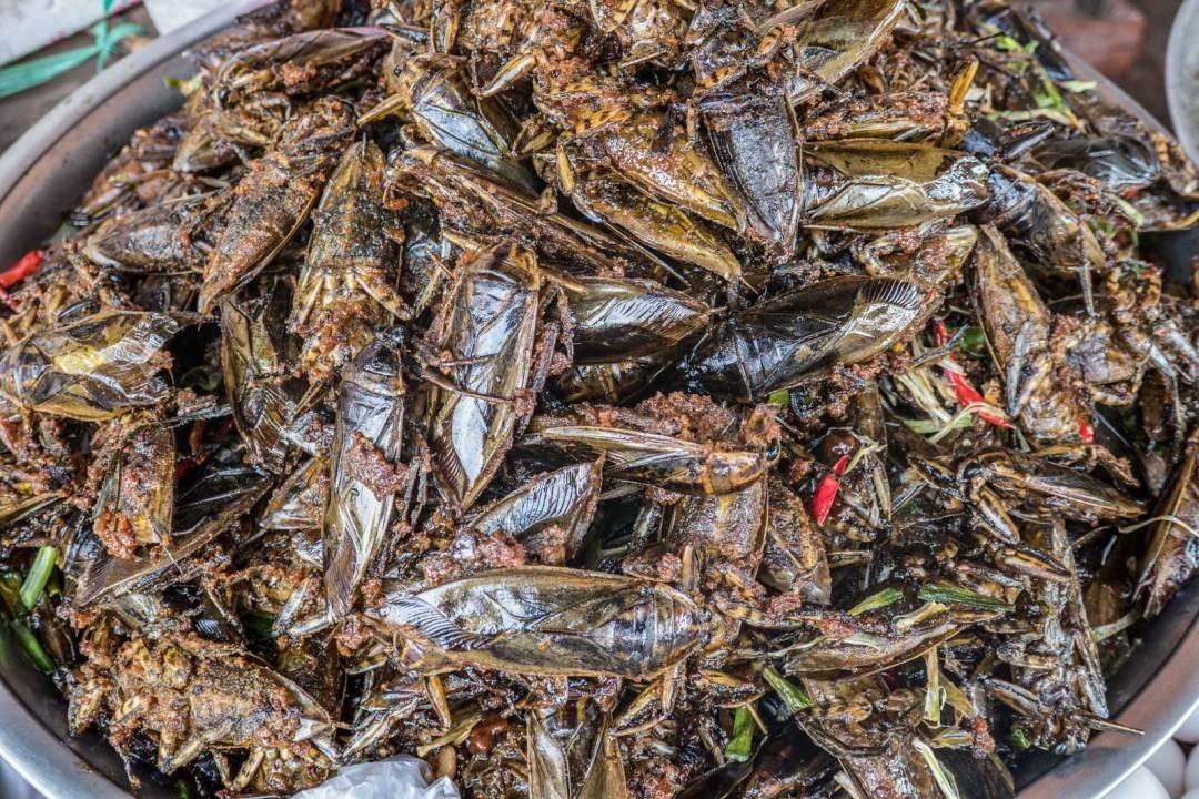 Kampong-Kleng-bugs-1600x1067