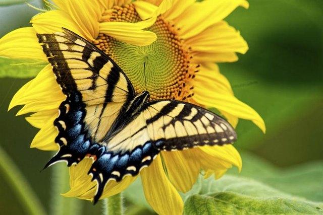 Hummingbird & amp; Jardines de la mariposa - Viveros de la ciudad y del país