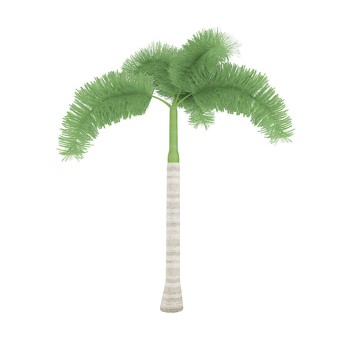 Tempting Foxtail Palm 3d Model Animated Max Obj Fbx C4d Mtl Foxtail Palm Tree Diseases Foxtail Palm Tree Lowes houzz-02 Foxtail Palm Tree