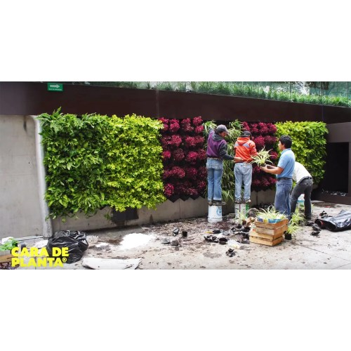 Medium Crop Of Best Vegetables For Vertical Gardening