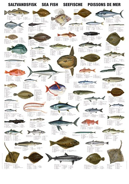 sea fish types from India Tamil Nadu , sea fish types manufactory ASN