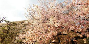 大阪旅行隨手記01 意外的櫻花、沒洗頭的日子、還有就算再強也要隨時警惕自己的武士