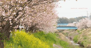 遠離人群感受櫻花季 住家附近的櫻花林
