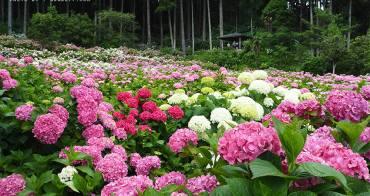 東京近郊 萬株繡球花繽紛夏季 あじさい屋敷(服部農園)