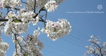 【遊記】櫻花季到來,跟著日本人到公園賞櫻去