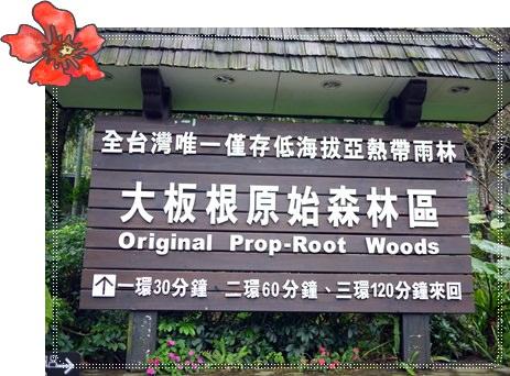 【旅遊】不用出國玩,來大板根森林溫泉度假村就對了