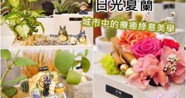 【台南小店】日光夏蘭。城市中的療癒綠意美學!終身保固~送禮自用漂亮小盆栽