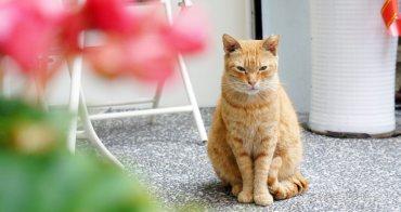 [板橋美食]AMYCA音。為你 音樂與貓咪相伴的美好空間 鄰近江子翠站